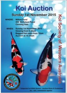 KSWA Koi Auction 1-11-2015 Suday Perth Region Preview