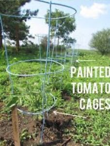 Looking for 20 tomato cages