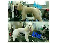 Dog Grooming 10% DISCOUNT!! Hurry!!
