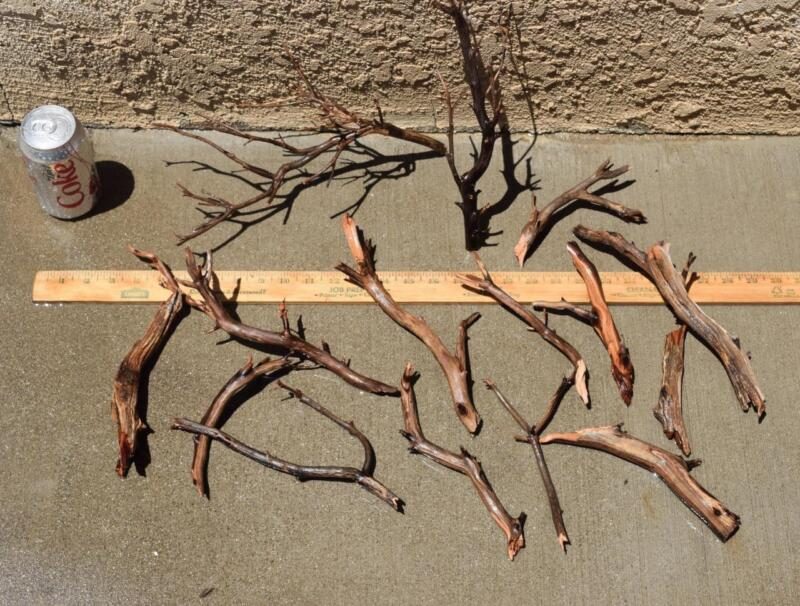 MANZANITA DRIFTWOOD MINI NANO GROUP 13 pieces ( moss plant aquarium )