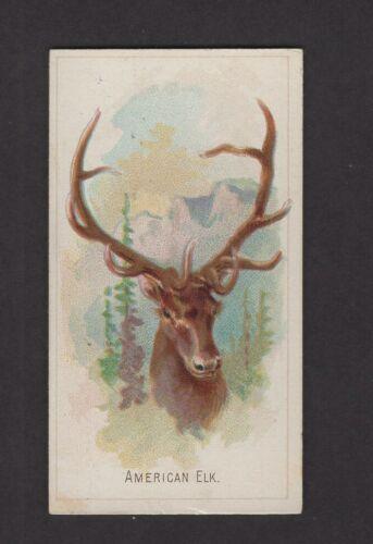 1888 Allen & Ginter Wild Animals of the World N25 American Elk