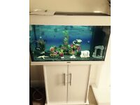Juwel Rio 125 tank with stand