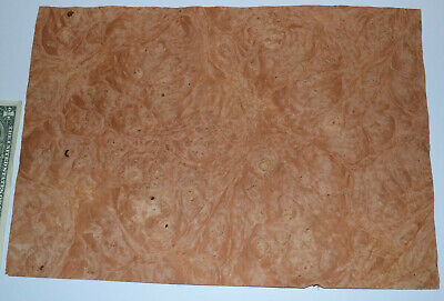 Chestnut Burl Raw Wood Veneer Sheets 10 X 14 Inches 142nd Thick  E7318-33