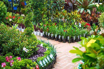 A Grade Plants for Sale!  Nursery!