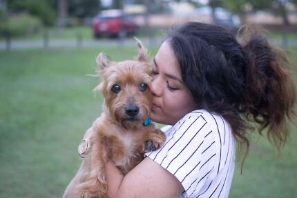 Affordable and dependable dog walker  pet sitter  and dog trainer near  Temperance  MI The Balance