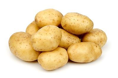 Potato seeds Farmer Vegetable seeds from Ukraine / early
