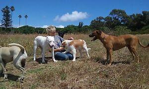 Dorthe's Dog Training Fremantle Fremantle Area Preview