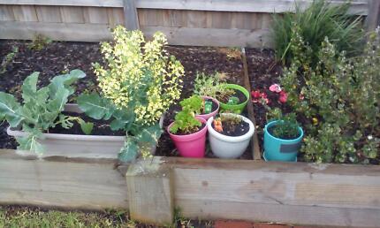 Free Garden Pots and Herbs Frankston Frankston Area Preview