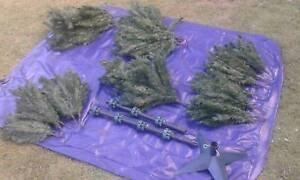 210cm Pine Christmas Tree $180 Albion Brisbane North East Preview