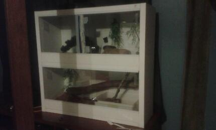 2 Snakes and a double enclosure Nanango South Burnett Area Preview