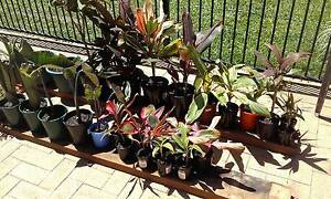 Tropical plants for sale Redlynch Cairns City Preview
