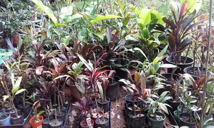 PLANT SALE - Sat & Sun 27-28 Jan, 9am-1pm - REDLYNCH VALLEY