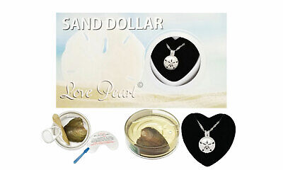 Sand Dollar Cage Pendant Love Wish Pearl Kit Cultured Pearl Oyster Necklace Set Sand Dollar Pendant Jewelry