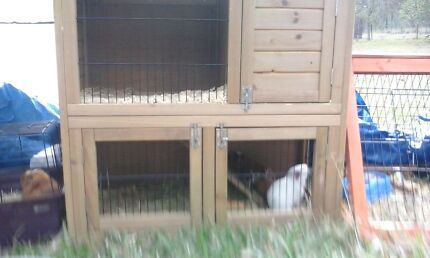 Two story guinea pig hutch Glenwood Fraser Coast Preview