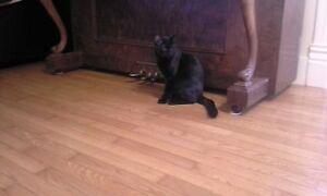 Male kitty