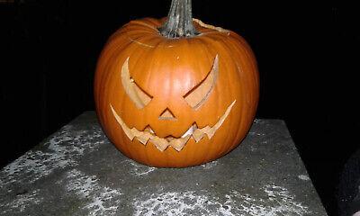 Speisekürbis Halloweenkürbis - Halloween Kürbisse