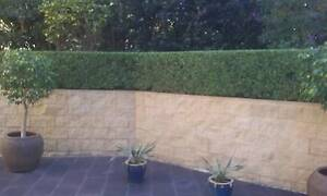 Hedge Trimming & Pruning Services Glebe Inner Sydney Preview