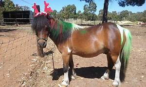 """""""Horsing Around"""" Kids Camps Roleystone Armadale Area Preview"""