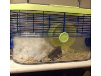 Dwarf hamster with cage,food and bedding