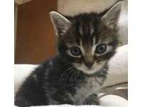 FIVE GORGEOUS KITTENS FOR SALE