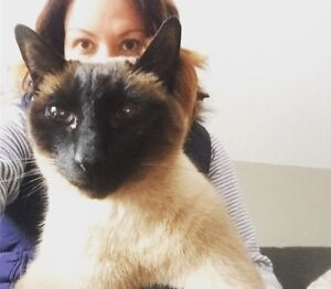 Janet the Pet Nanny ~ dog walking and cat sitting