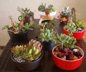 Succulent bowls Noarlunga Centre Morphett Vale Area Preview