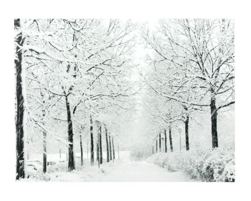 Northlight 15.75 Fiber Optic Lighted Twinkling Winter Tree Scene Canvas Wall Art