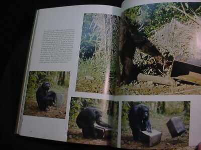 My Friends The Wild Chimpanzees Jane Goodall National Geographic Society Hc Book
