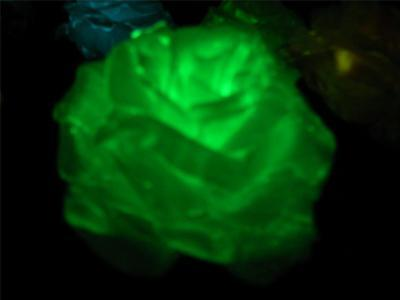 Blacklight Props (HALLOWEEN PROP Ghost Flowers - Glow in the dark and UV black light silk)
