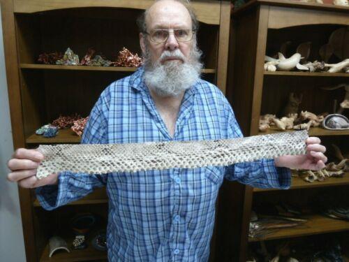 """EL1000-4-1) 27"""" Python Snakeskin snake skin piece hide craft band strap snakes"""