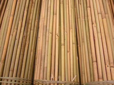 100 x 8ft  TONKIN BAMBOO CANES FOR PLANT SUPPORT 13/15mm