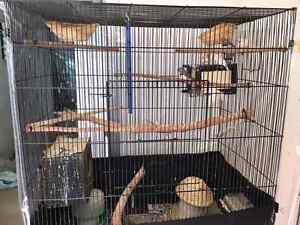 Large cage for sale with 9 free finches Kenthurst The Hills District Preview