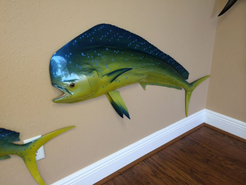 "50"" Bull Dolphin Half Mount Fish Replica (aka Mahi Mahi / Dorado)  - 10 Day"