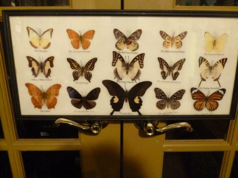 15  Beautiful Butterflies & Moth Collection Taxidermy Framed