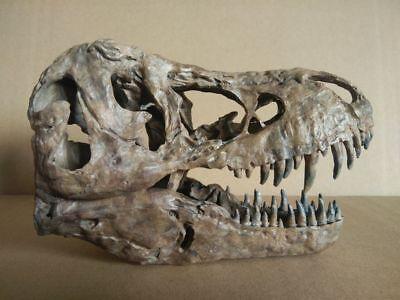 New, 17CM,Dinosaur model / T-REX Skull Small Model XB-1801 for sale  Shipping to Canada