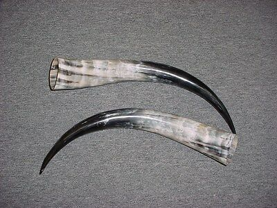 "13"" - 16"" STEER Horns Mounted Cow Bull LONGHORN TAXIDERMY Pairs Polished"