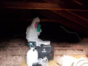 Discount Mold Removal Services