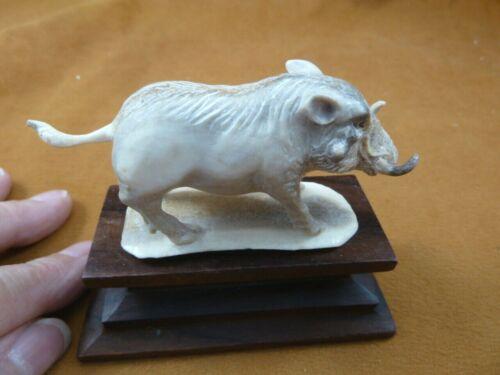 (wart-21) Wild hogs Warthog of shed ANTLER figurine Bali detailed carving boar