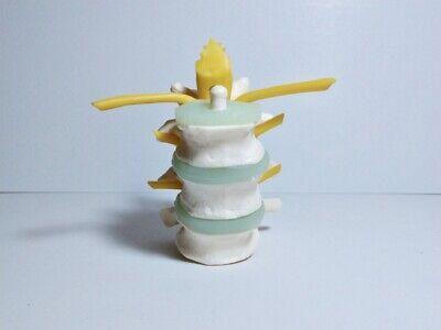 Vintage Medical Plastics Laboratory Spine Vertebra Section Anatomical Model