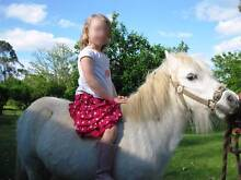 SHETLAND PONY Mare 12 yrs old  $500 FIRM PRICE Benarkin North Darling Downs Preview