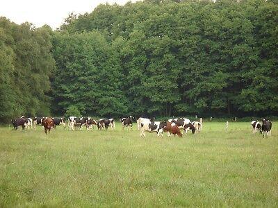 Bauernhof direkt