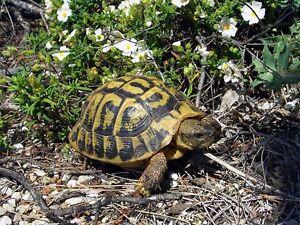 100 semi di erbe e piante selvatiche per tartarughe for Oggetti per tartarughe