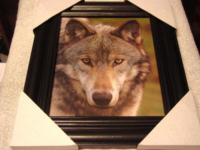WOLF 11X13 MDF FRAMED PICTURE ( BLACK COLOR FRAME )