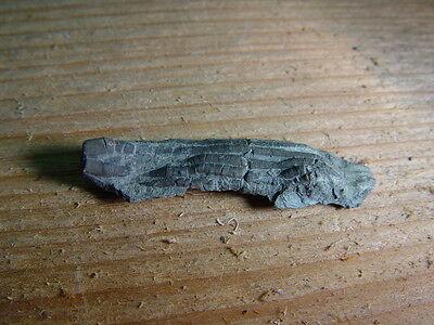 GEOLOGICAL ENTERPRISES Ordovician fossil Crinoid Ectenocrinus grandis Ohio