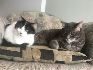 Two loving cats