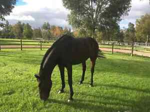 EQUICENTRAL SYSTEM AGISTMENT WANNEROO Mariginiup Wanneroo Area Preview