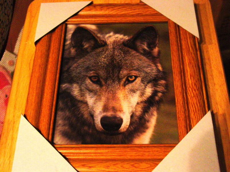 WOLF 11X13 MDF FRAMED PICTURE POSTER ( WOOD LOOK FRAME )