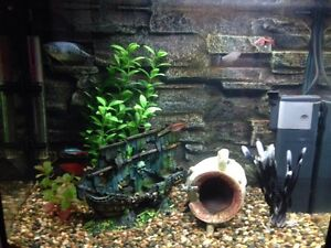 65L fish tank, stand, ornaments with 8 tropical fish Hallam Casey Area Preview