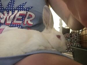 Rabbit for sale Tweed Heads South Tweed Heads Area Preview