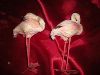 TWO CHRISTMAS PINK FLAMINGO OLD WORLD TREE ORNAMENTS